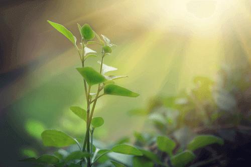 fotossintese