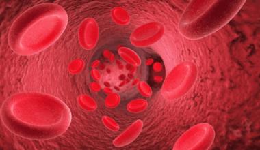 sistema circulatório sangue hemácias
