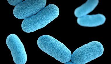 bactérias azuis